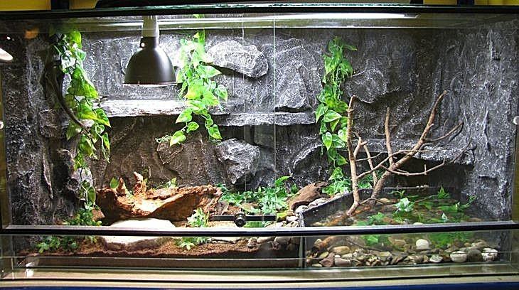ᐉ террариум своими руками для хамелеона, черепахи, ящерицы, паука птицееда, улиток, как сделать из стекла и оргстекла - zoovet24.ru