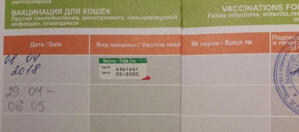 Прививки котятам до года