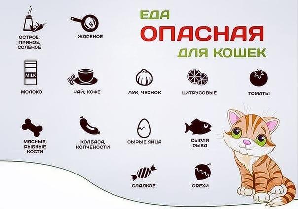 Чем кормить котенка, какой корм лучше: сухой, влажный или натуралка, их плюсы и минусы, отзывы и советы ветеринаров