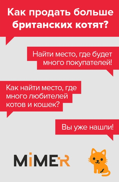 Как выбрать котенка для дома - на что нужно обратить внимание - kotiko.ru