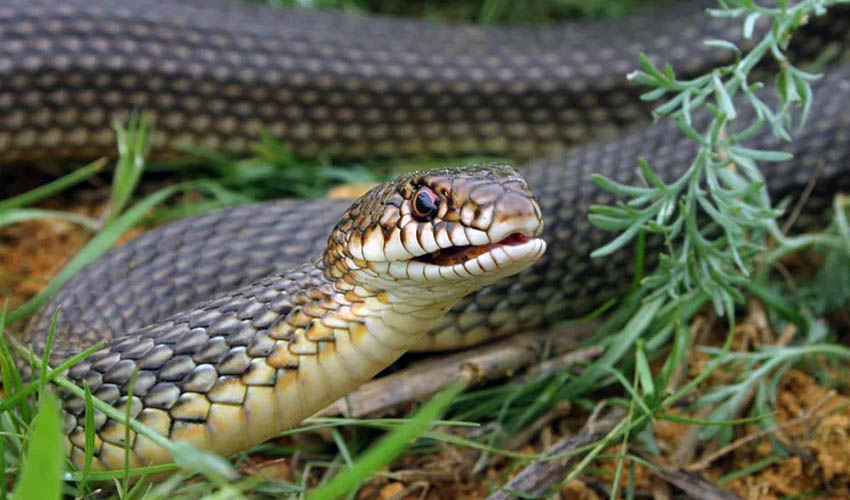 Правила поведения при укусах змей | гбуз республики крым