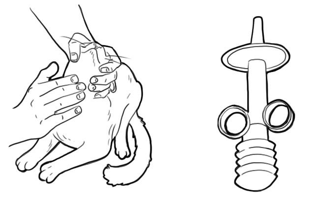 Как дать таблетку кошке, чтобы лекарство принесло пользу и никто не пострадал