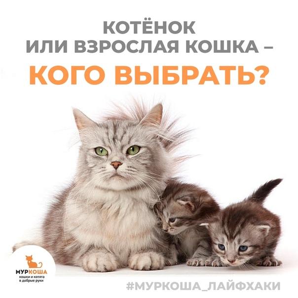 Кот или кошка: кого выбрать для проживания в квартире