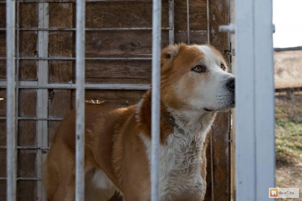 10 лучших сторожевых собак