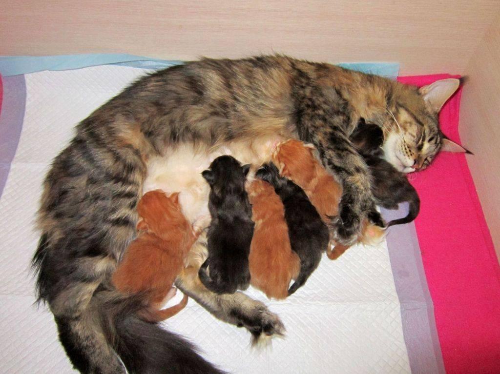 Можно ли кошкам яйца и в каком виде давать их питомцам?   hill's pet