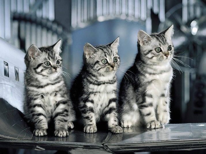 10 самых полосатых пород кошек – что объединяет всех котов мира, кроме желания быть независимым.