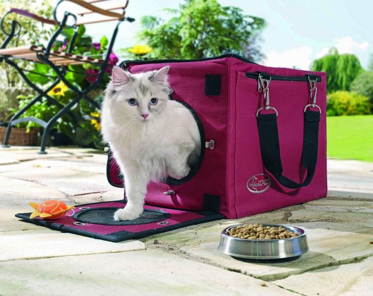 Кому можно оставить животное, пока я в поездке: что нужно знать про гостиницы и передержки