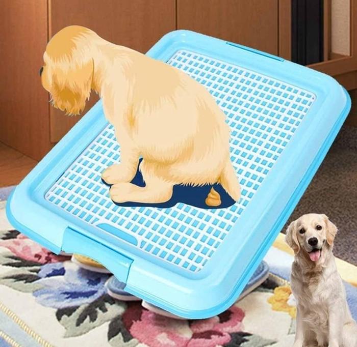 Как приучить собаку к туалету на улице — советы кинологов ⋆ собакапедия