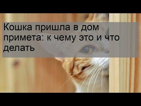 Чёрный кот или кошка в доме - все приметы и поверья