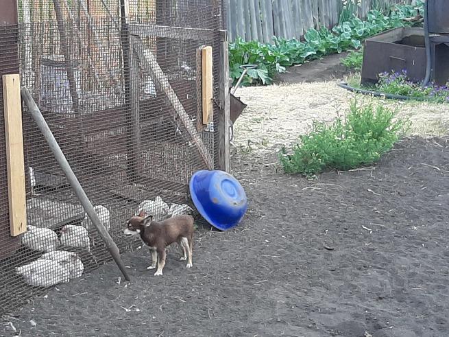 Как отучить собаку копать ямы во дворе: простые и эффективные способы