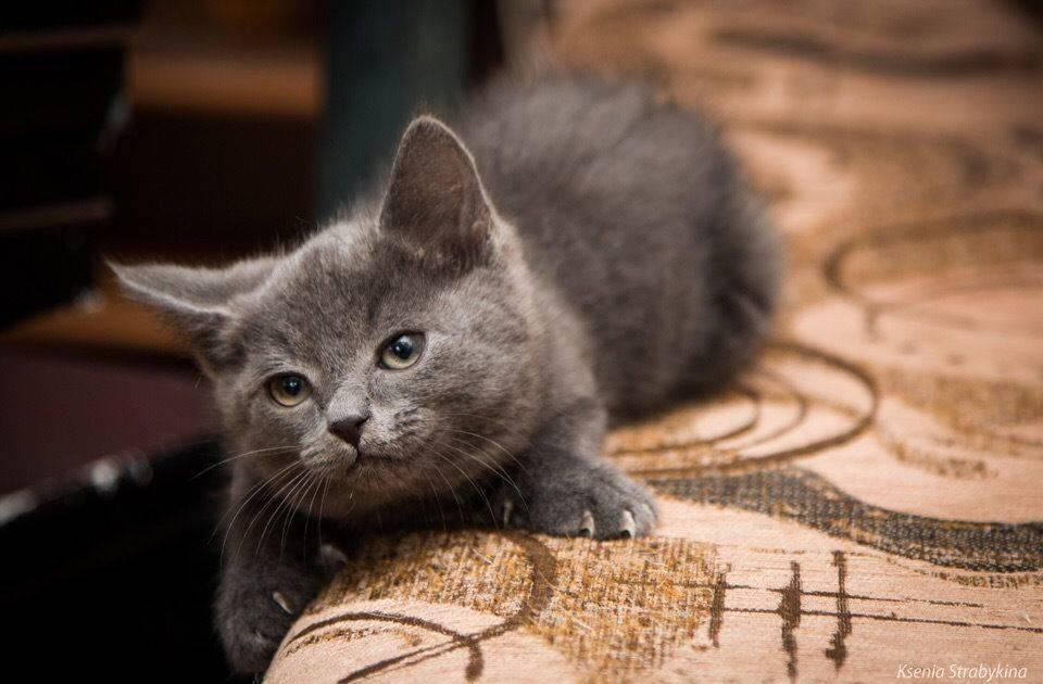 390+ кличек для черных котов мальчиков, красивые имена для черного котенка.