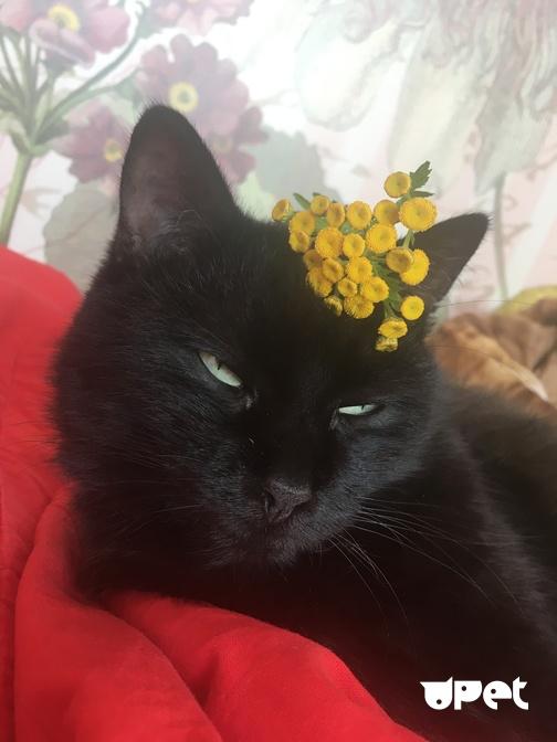 Холангит у кошек лечение