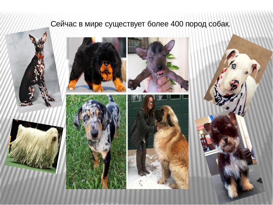 Точные данные о том, сколько на земле существует различных пород собак