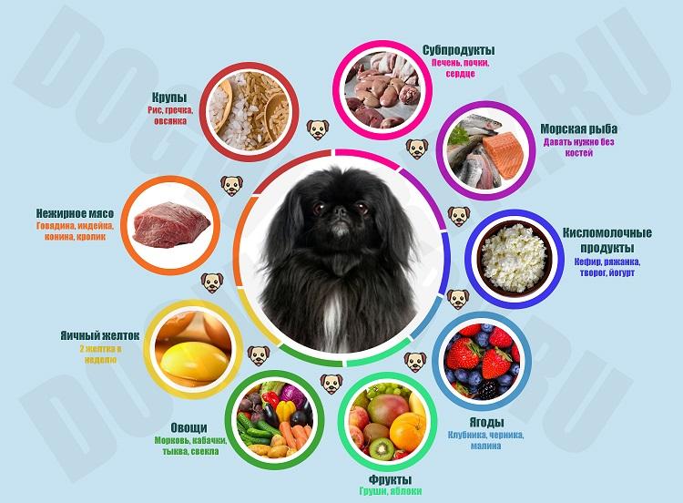 Чем кормить привередливых собак