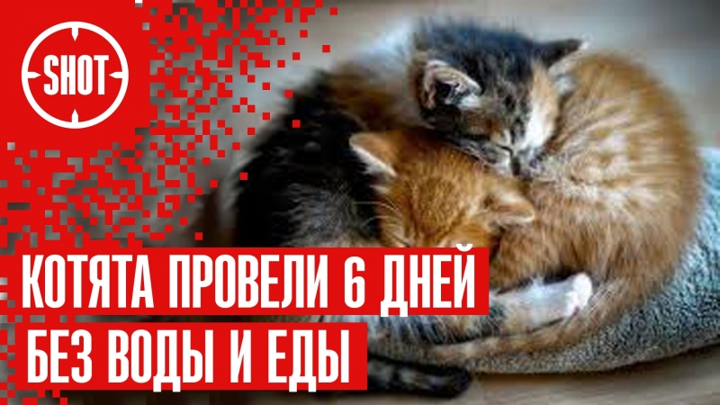 Сколько дней кошка может прожить без воды