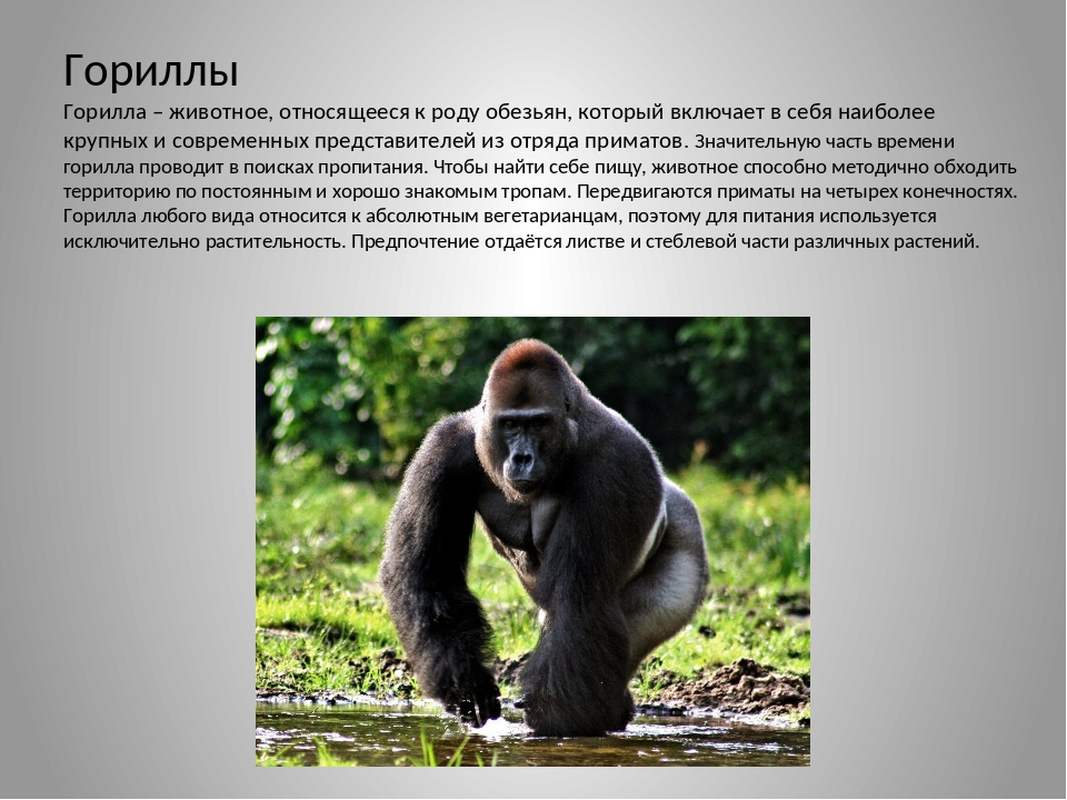 Жизнь хомяков в дикой природе: секреты выживания