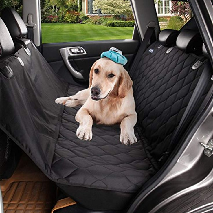 ᐉ как перевозить собаку? - ➡ motildazoo.ru