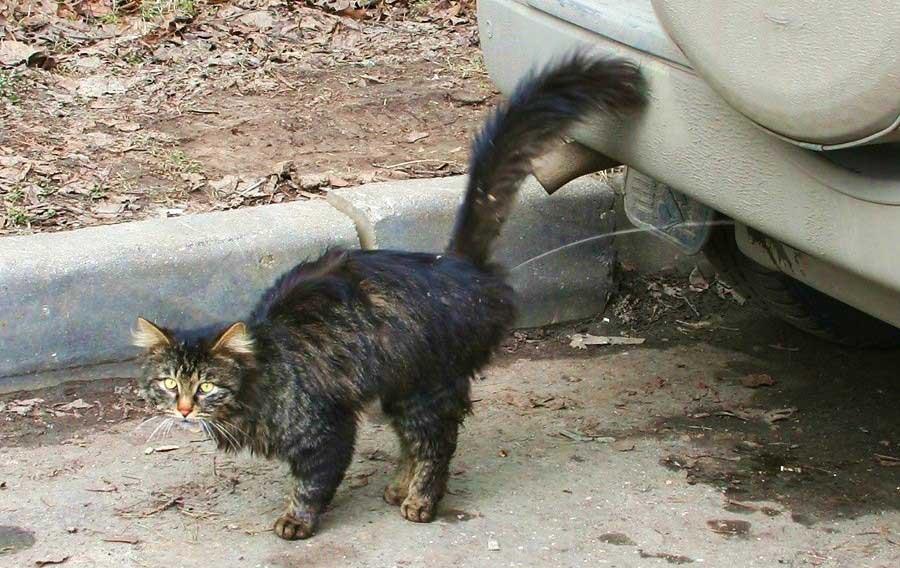 Как наказать кошку, можно ли и как правильно это делать, чтобы кот понял (за плохое поведение, за то, что гадит, кусается)