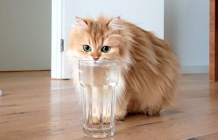 Сколько воды должна пить кошка: питьевой режим для котят и взрослых котов
