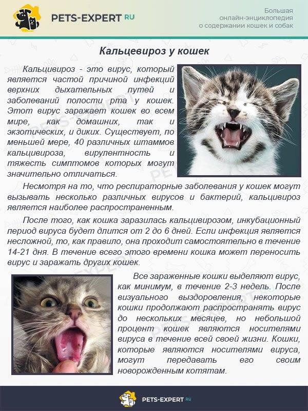 Болезни кошек: лишай, глисты, чумка, бешенство, цистит, демодекоз, клещи - донецкий ветеринарный диагностический центр