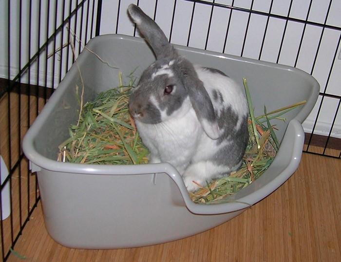ᐉ разведение декоративных кроликов: особенности содержания и ухода - zooon.ru