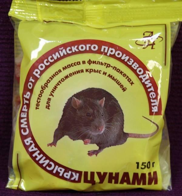 Отравление крысиным ядом у собаки: симптомы и действия по спасению