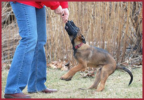 Что делать, если щенок кусается, не слушается: основные методы воспитания