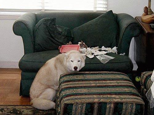 Чем занимаются собаки когда никого нет дома