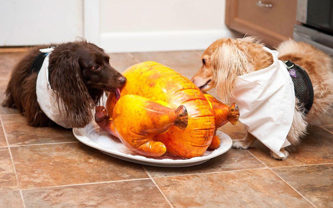 Почему собакам нельзя сладкое | можно ли давать