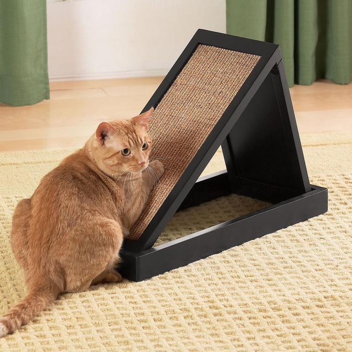 "Как приучить кошку к когтеточке   блог ветклиники ""беланта"""