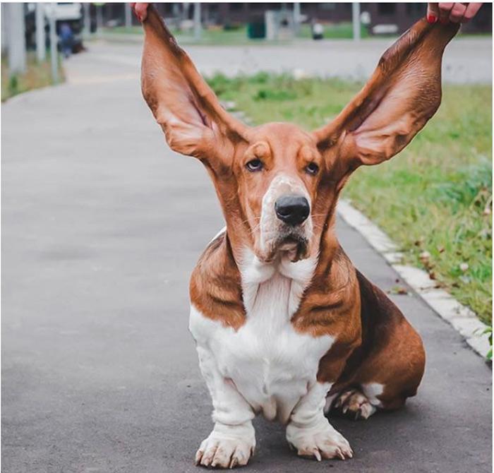 Длинные породы собак. описание, особенности, виды, названия и фото длинных пород собак | животный мир