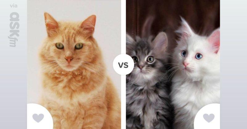 Кошки для детей (47 фото): какие породы подходят лучше всего? как выбрать кота в квартиру? какие кошки не любят детей?