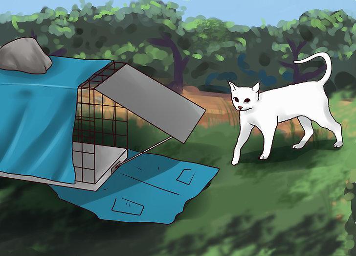 Как поймать бездомного котенка - wikihow