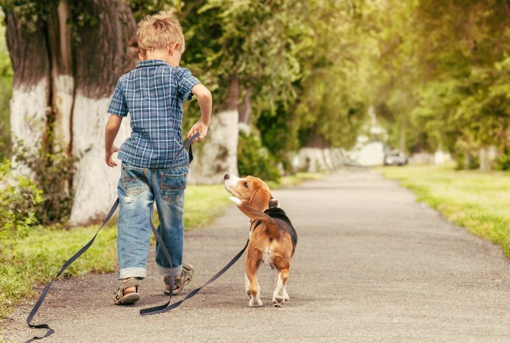 Сколько раз в день нужно гулять с собакой