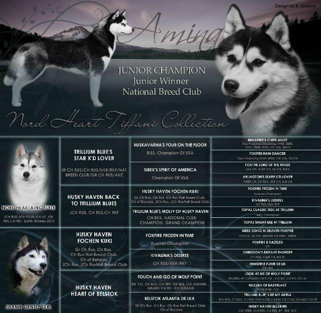 Имена для хаски-девочки: как можно назвать собак? клички для щенков со значением, список красивых и редких имен для девочек