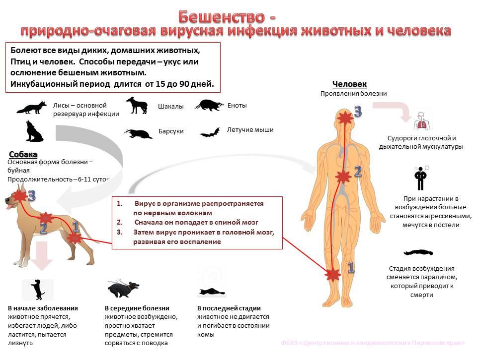 Могут ли кошки заболеть простудой или гриппом?