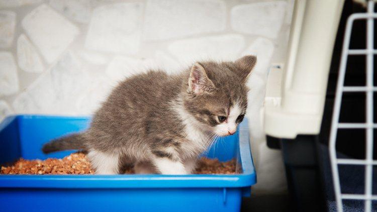 Причины из-за которых кот долго сидит в лотке