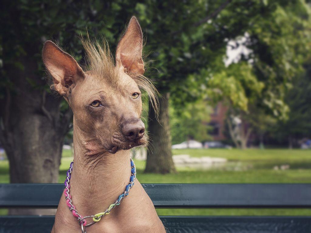 Показ фильма «перуанская голая собака» | wds2016 moscow