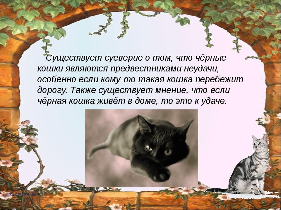 Кошка пришла в дом — что значит эта примета?