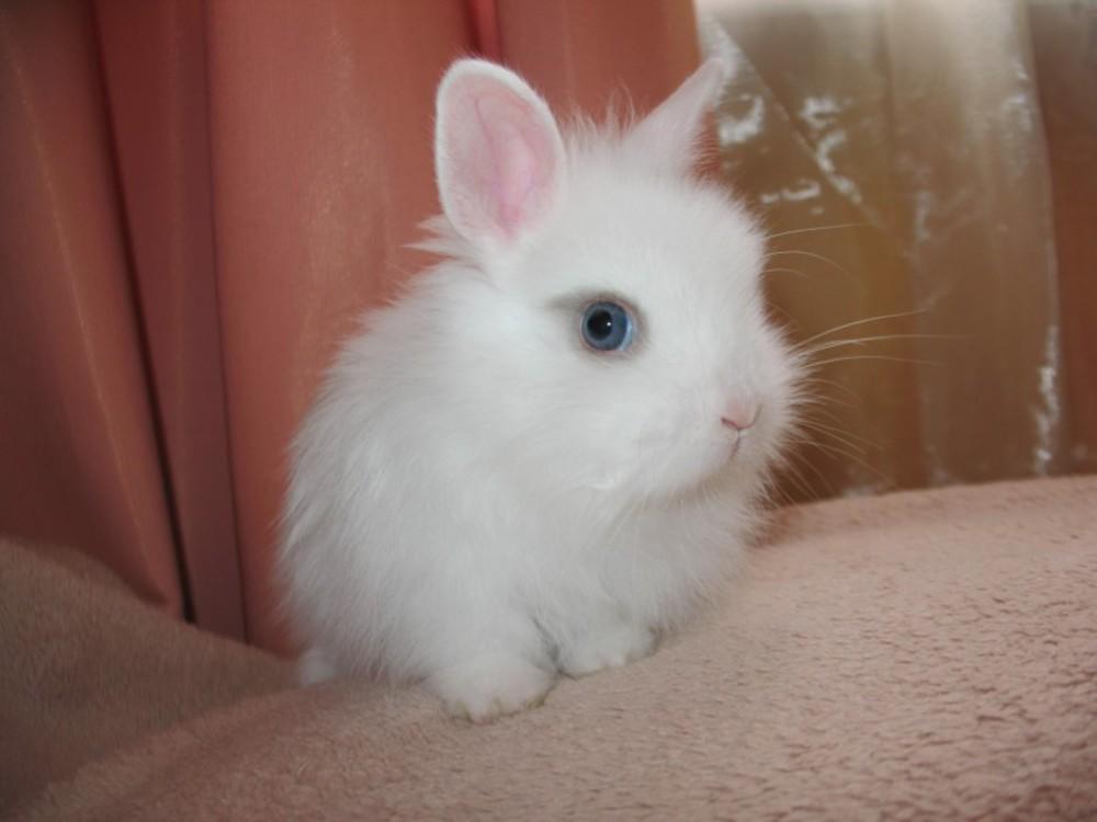 Имя для кролика: список лучших кличек для питомцев мальчиков и девочек