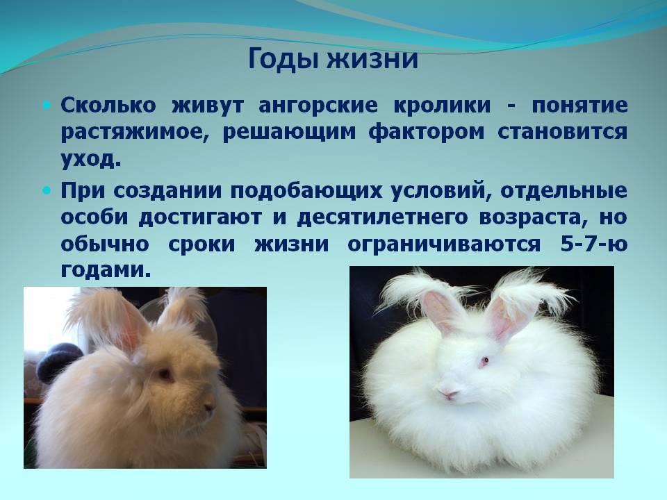 ᐉ сколько лет живут кролики в домашних условиях: декоративные, карликовые? - zooon.ru