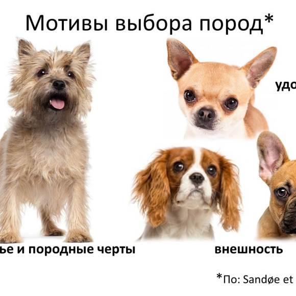Как узнать крупную породу собак