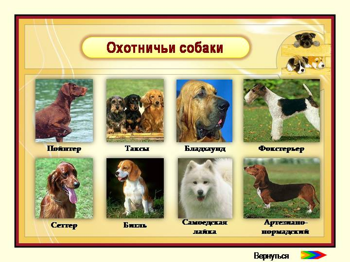 Собаки служебные список пород