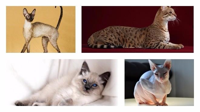 Гипоаллергенные животные: список из 30 видов и пород - zenamoda.ru