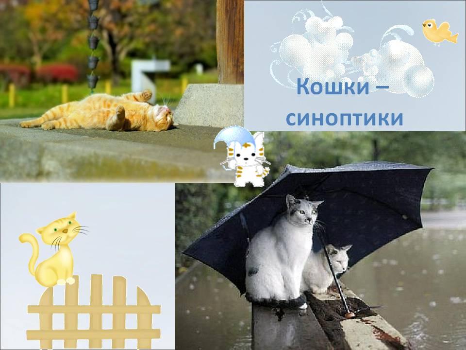 Народные приметы о погоде по животным, как предсказать по их поведению