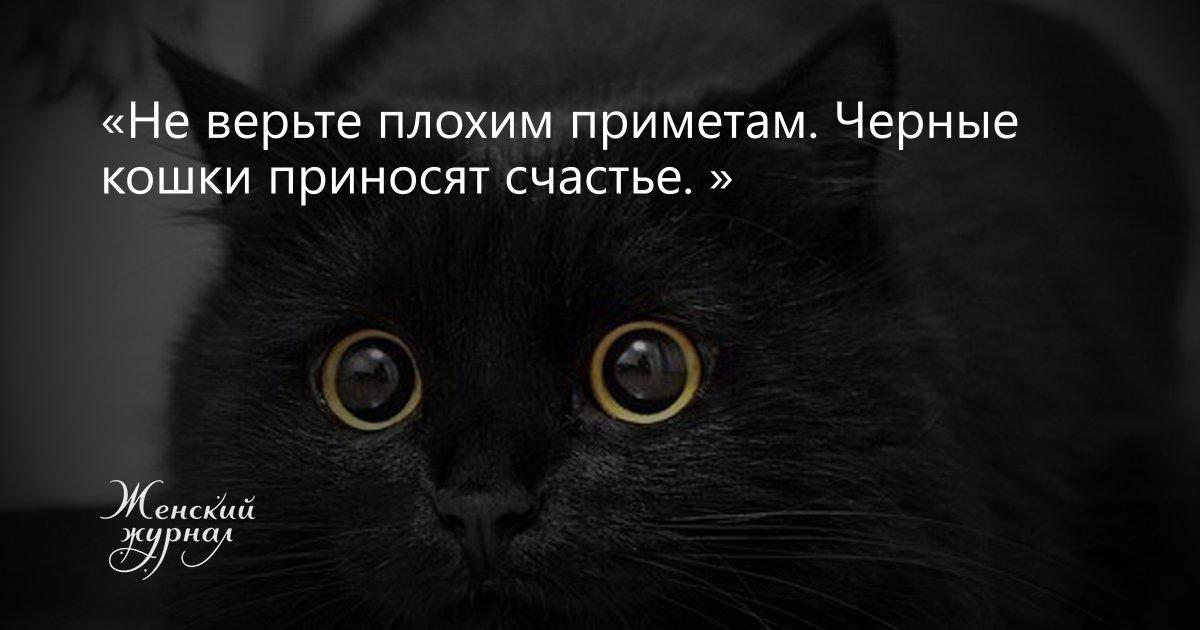 Кошка пришла в дом что значит эта примета: трактовка по месяцам