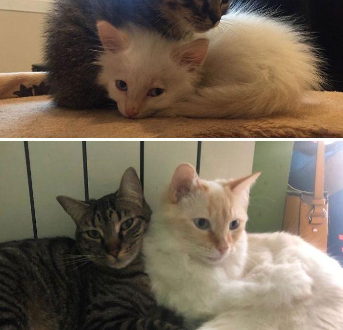 Когда котенок становится взрослой кошкой?
