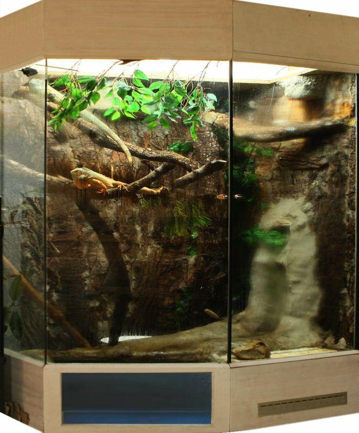 Домашние ящерицы (120 фото): описание видов с фото и названиями, как выглядят, повадки, особенности, интересные факты