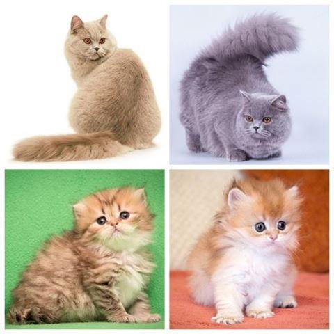 Кто лучше кот или кошка в квартире: плюсы и минусы