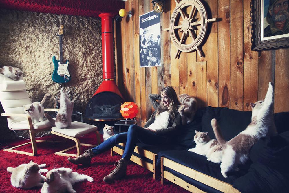 Какую породу кошек выбрать для квартиры: самые спокойные, здоровые, активные и неприхотливые питомцы